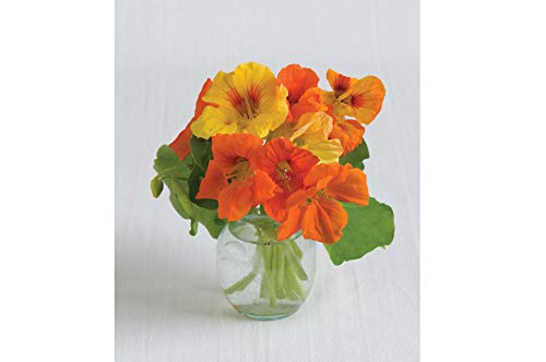 (David's Garden Seeds Flower Nasturtium Kaleidoscope Mix SL1882 (Multi) 50 Non-GMO, Organic Seeds)