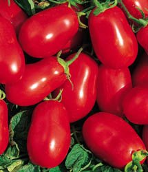 TOMATO - Roma VF - PLUM - Italian favourite - 40 seeds