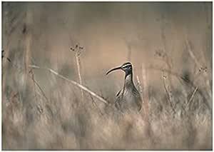 فوتو بلوك بيردز المناظر الطبيعية تابلوه 23 سم × 18 سم - 2724820073317