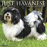 Quality 2019 JUST Havanese Calendar with Free Rock Music MEMOROBILIA (Key Chain, Pen,Magnet,Card ETC.) Calendar Planner,Calendar Wall,Pocket, Monthly,DO IT All,Gallery Edition