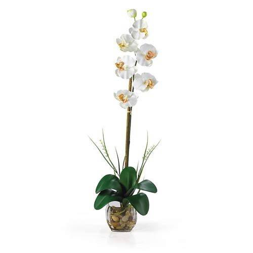 Phalaenopsis Silk Orchid Plant Cream (Nearly Natural 1104-CR Single Phalaenopsis Liquid Illusion Silk Flower Arrangement, Cream)