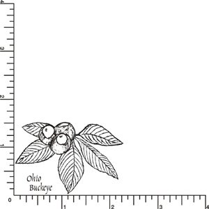 Ohio Buckeye Rubber Stamp By DRS Designs