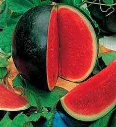 50 Sugar Baby Watermelon Seeds