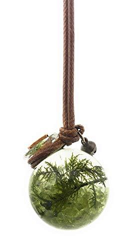 Living, miniature aquarium necklace - Terrarium Pendant | Live Plant Jewelry - Orbling Peridot Olivine