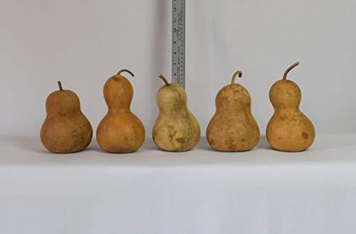 "Box of 5 Dried Bottle Gourds - 4"" Diameter"