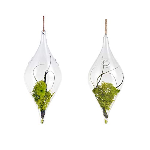 EssenceLiving Hanging Glsss Water Vase, Teardrop Glass Plant Planting Vase (Olive Glass(2PCS)) (Teardrop Glass Hanging Vases)