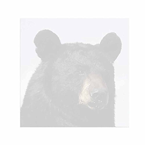 Black Bear Sticky Notes - Set of 3 - Wildlife Animal Theme Design - Stationery Gift - Paper Memo Pad - Office Business School Supplies