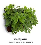 Living Wall Planter INDOOR/OUTDOOR USE w/Reservoir  (Color: Chocolate) Vertical Garden (Modular, Sustainable, Eco, Green) Hanging Planter
