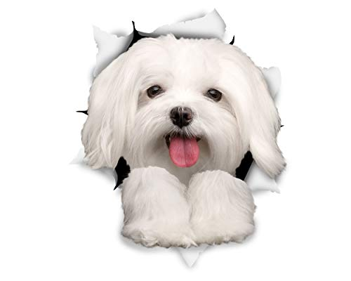 Winston & Bear 3D Dog Stickers - 2 Pack - Cute Maltese Dog Decals for Wall, Fridge, Toilet and More - Retail Packaged Maltese Stickers]()