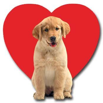 golden puppy love die cut dog valentines day card - Dog Valentines Day Cards