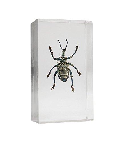 resin beetle - 6