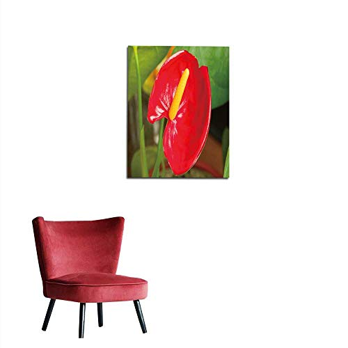 longbuyer Wall Paper Anthurium Flower Anthurium The Largest Genus of The Arum Family Araceae General Common Names Include anthurium tailflower Flamingo Flower and laceleaf Mural 24'x32'