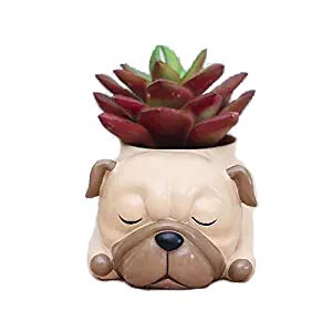 WISH HALLY WOOD Pug Succulent Planter Pots for Office House Balcony Landscape Creative Decorative Flower Pots (Pug)]()
