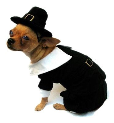 Size 6 Pilgrim Boy Costume for Dogs fits 16