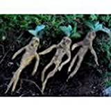 Unique~(Harry Potter Herbology Class)~Mandrake Seed~1 Seed ONLY