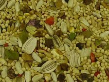 Volkman Cockatiel with Sunflower Seed Mix 4lb, My Pet Supplies