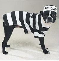 [Dog Costume - Prison Pooch Dog Halloween Costume - Small] (Prison Halloween Costumes)
