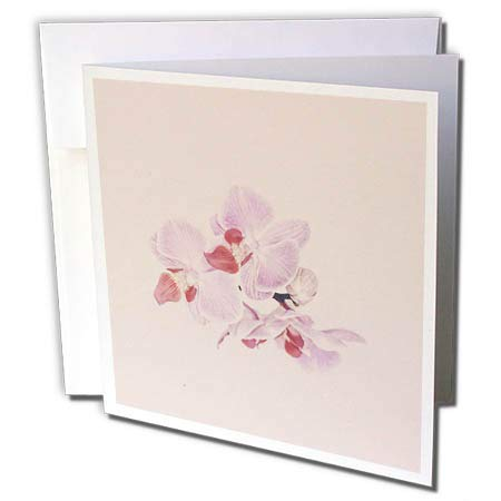 3dRose Andrea Haase Nature Photography - Orchid Flower in Matte Pastel Pink - 1 Greeting Card with Envelope (Orchid Pastel Envelope)