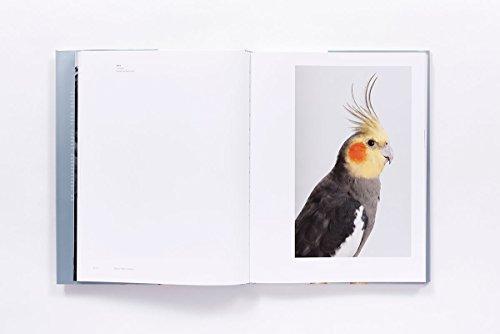 Bird Love by ABRAMS (Image #2)