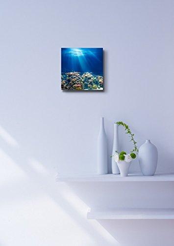 Coral Reef Under The Ocean Sea