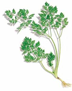 Richters Curled Chervil Seeds
