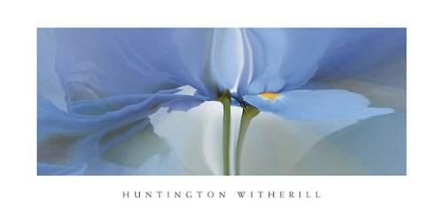 Iris Witherill - Iris #20 Huntington Witherill Flowers Floral Print 36x18 Poster
