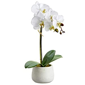 "16"" Silk Phalaenopsis Orchid Flower Arrangement w/Cement Pot -White (Pack of 2) 107"