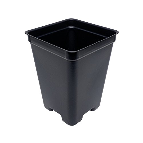 2.65 Inch Square Deep Pots - New Design - Made in the USA for Organic Gardening, Greenhouse, Nursery, Tomatoes - Recyclable (Black, 45) (Recycled Plastic Square)