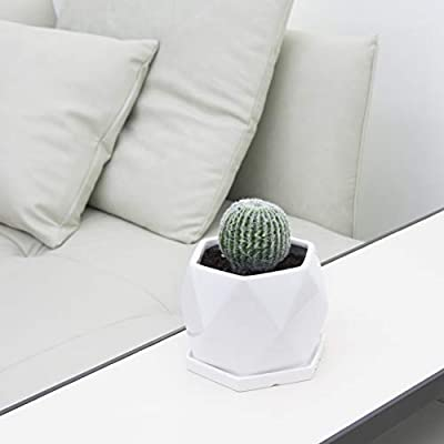 Ekirlin Hexagon Flower Pot with Tray,Green Plants Container for Home Decoration, Medium Ceramic Flower Planters with Drain Hole for Indoor Outdoor Cactus Succulent (White): Home & Kitchen