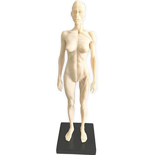 HUBERY MODEL 11 Inch Female Human Anatomy Model of Art Anatomy Figure(White) ()