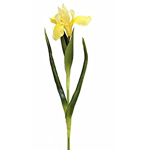 "Afloral Small Real Touch Iris Stem in Yellow - 23"" Tall 82"