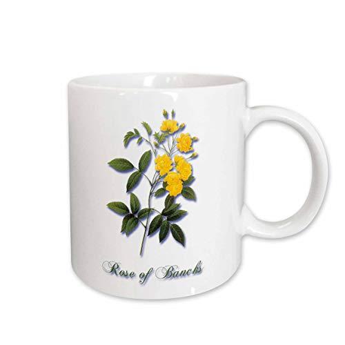 (3dRose BLN Flowers and Fruits by Pierre Joseph Redoute - Bright Yellow Rose of Bancks with Rosebuds Botanical Print - 15oz Two-Tone Yellow Mug (mug_180171_13))