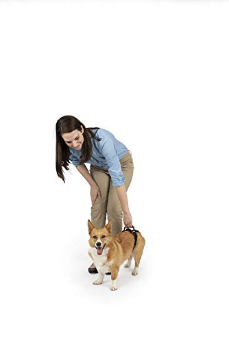 PetSafe CareLift Rear Support Harness - Lifting Aid with Handle - Great for Pet Mobility and Older Dogs - Comfortable, Breathable Material - Easy to Adjust - Small