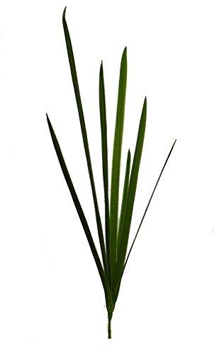 Cymbidium Leaf - Wholesale Silk Floral 40