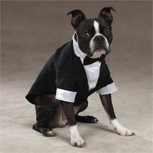 Esc Yappily Ever After Groom Tuxedo Medium, My Pet Supplies
