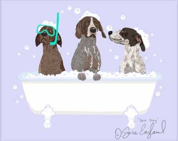Spa Day German Shorthair Pointer - 11x14 Matted Print