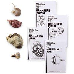 Nasco Sheep Organ Set - Dissection & Science Education Materials - LS03140 ()