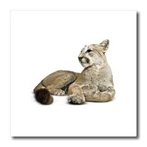 ht_158160_3 Edmond Hogge Jr - Mountain Lion Cat - Iron on Heat Transfers - 10x10 Iron on Heat Transfer for White Material