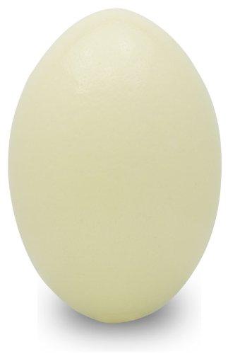 Premium Rhea Eggshell - Grade A