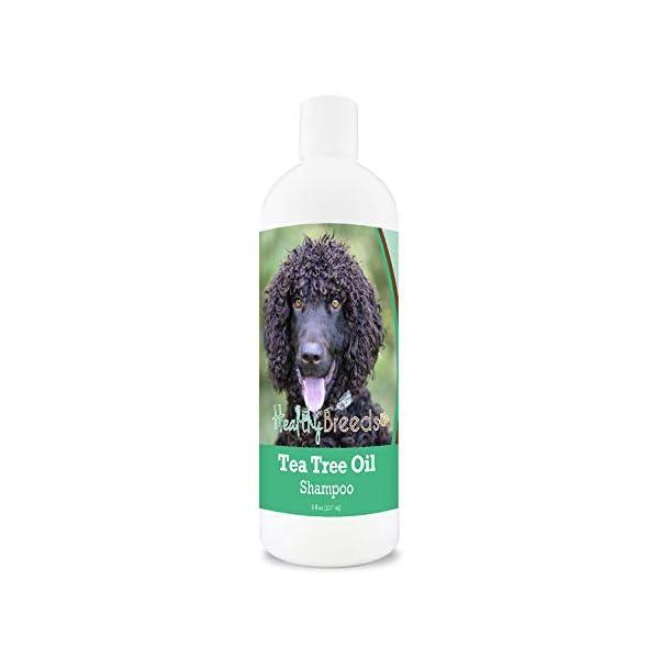 Healthy Breeds Great Dane Tea Tree Oil Dog Shampoo 1