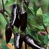 Organic Czechoslovakian Black Chile Pepper - 50 Seeds