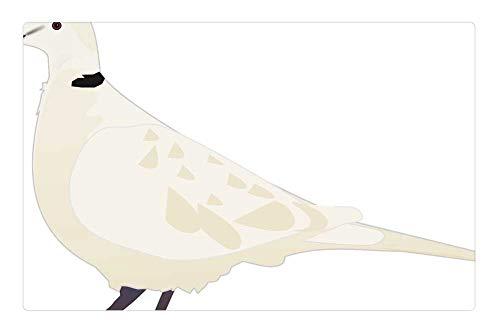 Tree26 Indoor Floor Rug/Mat (23.6 x 15.7 Inch) - Animal Bird Turtledove