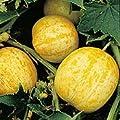 Lemon Cucumber Seeds - 2.1 grams - GARDEN FRESH PACK!