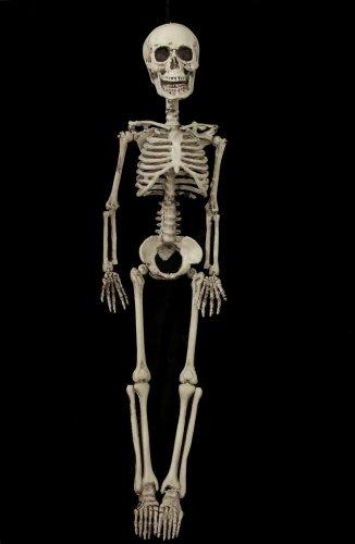 Frugal Fernando Skeleton (Bucky Skeleton)