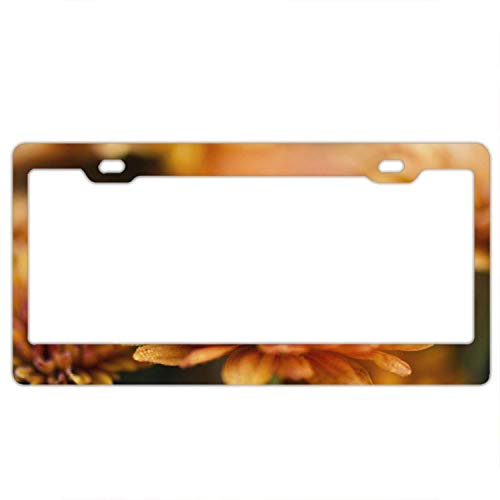 YEX Abstract Chrysanthemum Wallpapers License Plate Frame Car Tag Frame Auto License Plate Holder 12