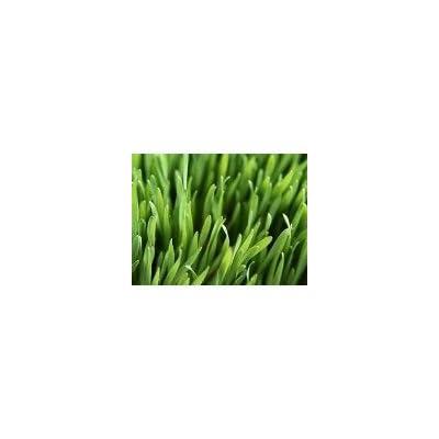 Wizard Seed LLC 80/20 Blend 2 Pound : Garden & Outdoor