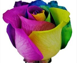 Tinted Rainbow Roses| 50 cm. long (20'') 50/100/200 (100)