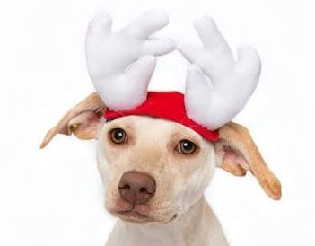 Dog Antler Christmas Costume- Dog & Cat Costume - Christmas Reindeer Hat - Antlers- Handmade- Small Pet Gift - Turn your pup into a flying (Reindeer Antlers For Sale)