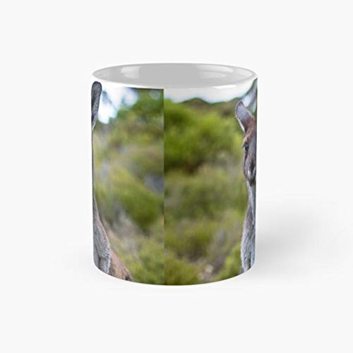 Park T-shirts South Printed - Jump Adelaide Joey Innes National Park 11 Oz Coffee Mugs