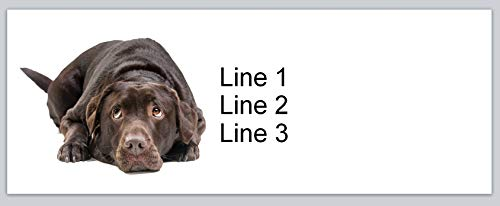150 Personalized Address Labels Lovable Dog Chocolate Labrador (P 688)
